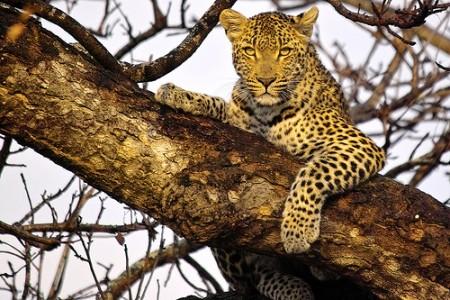 WILD WILD SUDAFRICA. Mare, Natura e ovviamente Safari. Qui l'avventura è totale dall'inizio alla fine del viaggio.